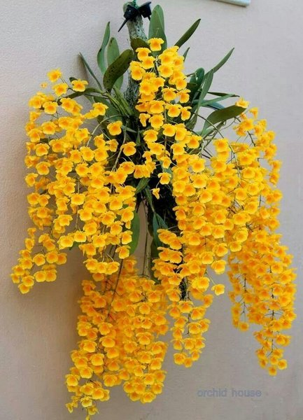 36 Gorgeous DIY Hanging Orchids Ideas - Onechitecture.jpg