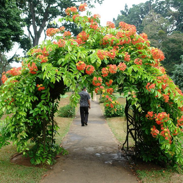 arbor-and-archway-in-garden.jpg